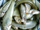 Canh chua cá Linh - bông Điên Điển bước làm 3 hình